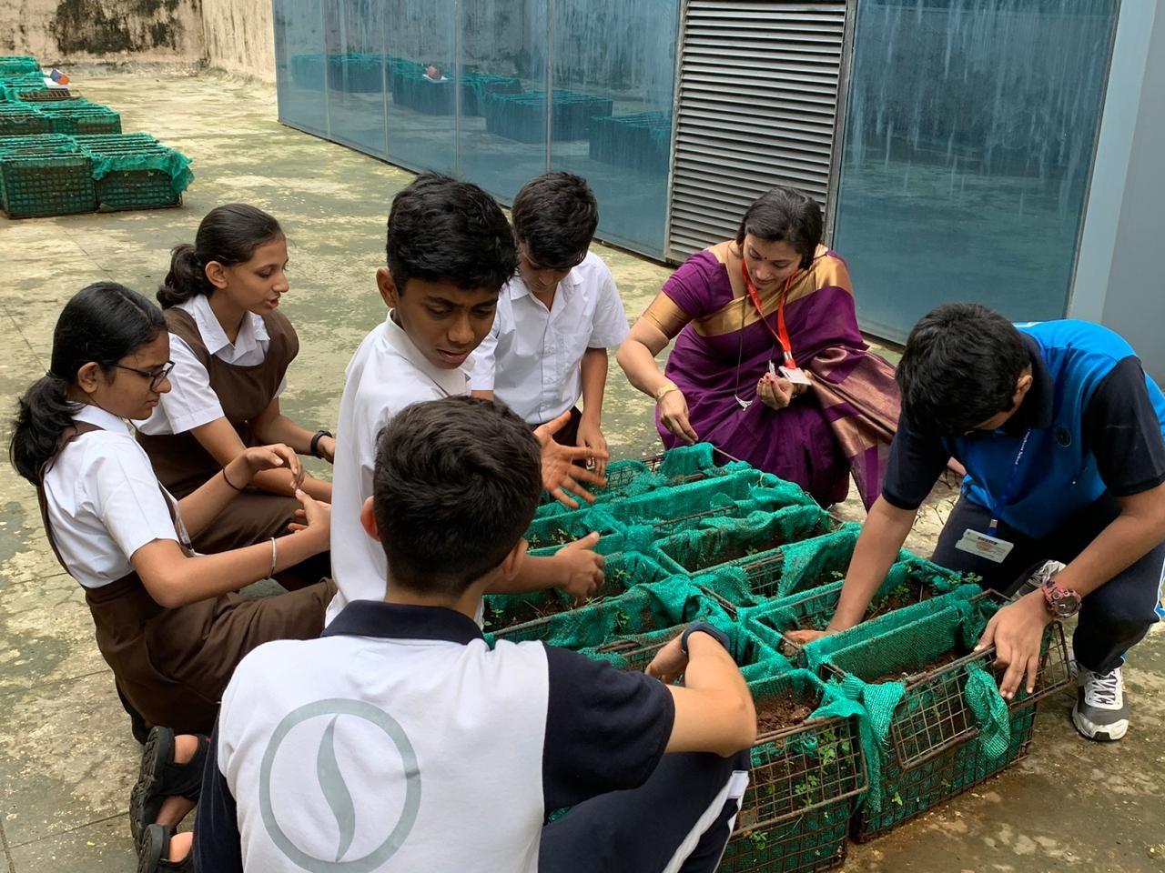 Smt Sulochana Singhania School Thane - organic farming