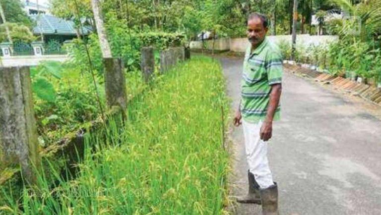 One individual's roadside beautification project turned into a farm (Kerala, India)
