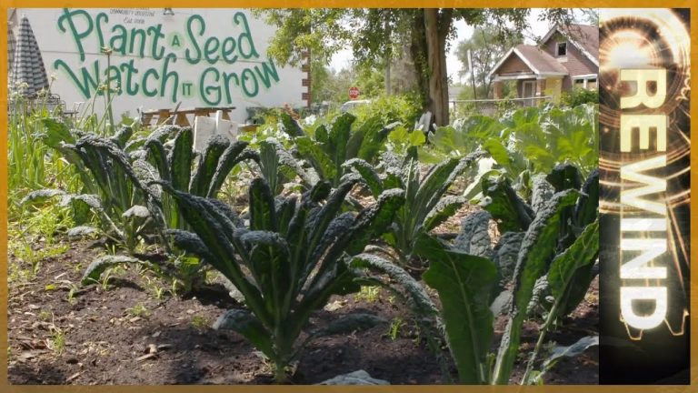 Motown to Growtown: Detroit's Urban Farmers (First screened in 2012, and a 2019 update)